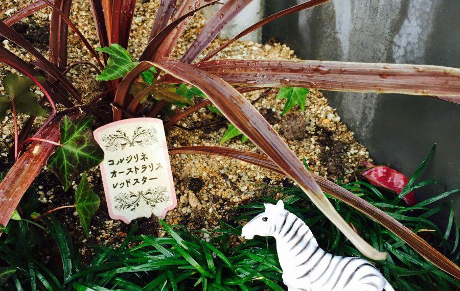 春に向けて〜可愛い植物には水を〜
