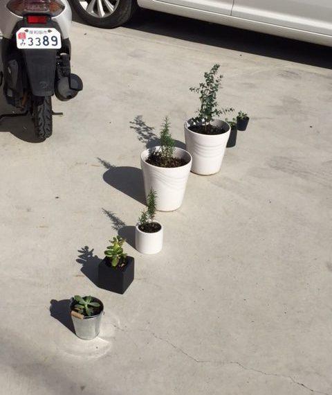 植物達の休日