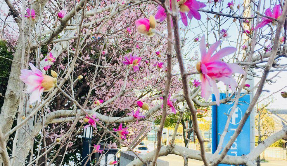 春の新着情報♪